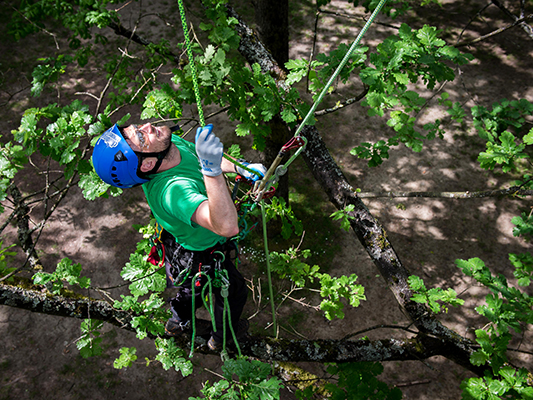 Arborist climbing on 2 rope wrenches