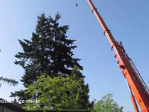 Fir tree crane removal