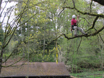 Arborist limb walking