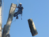 Arborists at work