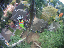 Arborist at the top of a tree