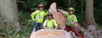 G,E,A - FB Cover - felled grand fir.png