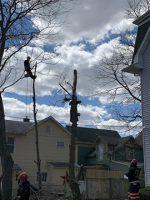 Tree Service Photo