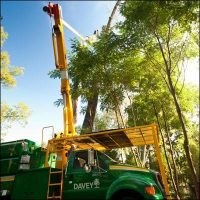 the-davey-tree-expert-pany-10-s-tree-services-elegant-of-davey-tree-expert-company-of-davey-tree-expert-company.jpg