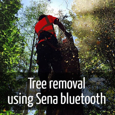 Large Douglas fir tree removal Good communication is key