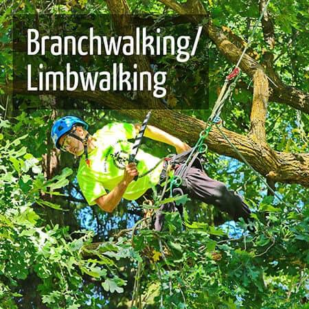 Branchwalking