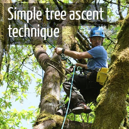 Simple method of ascending a tree