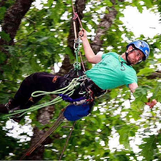 Arborist swinging through canopy ClimbingArborist.com