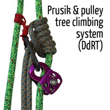 Prusik & pulley tree climbing system