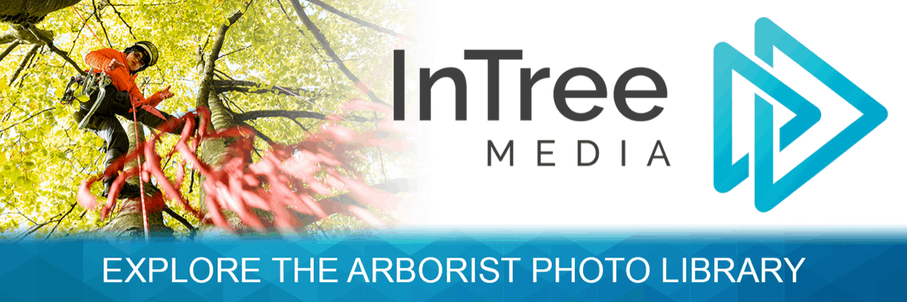 InTree Media Photo library