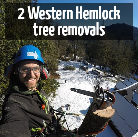 2 hemlock tree removals by ClimbingArborist.com
