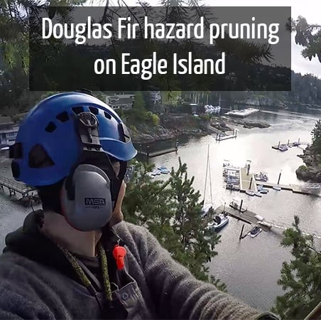 Eagle Island Douglas Fir pruning by ClimbingArborist.com