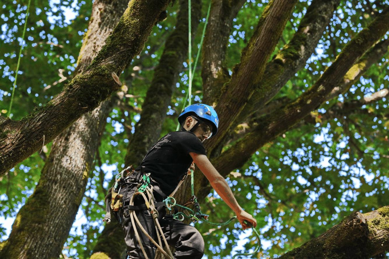 Limbwalk tree climbing ClimbingArborist.com