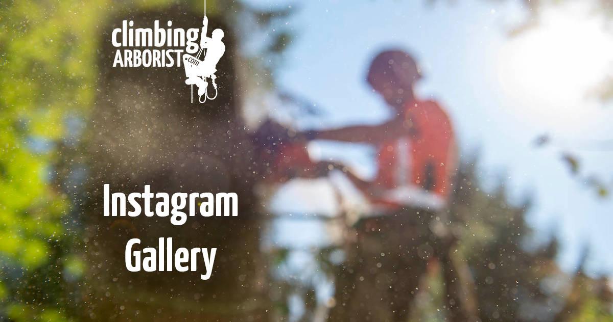 Instagram Gallery : ClimbingArborist.com