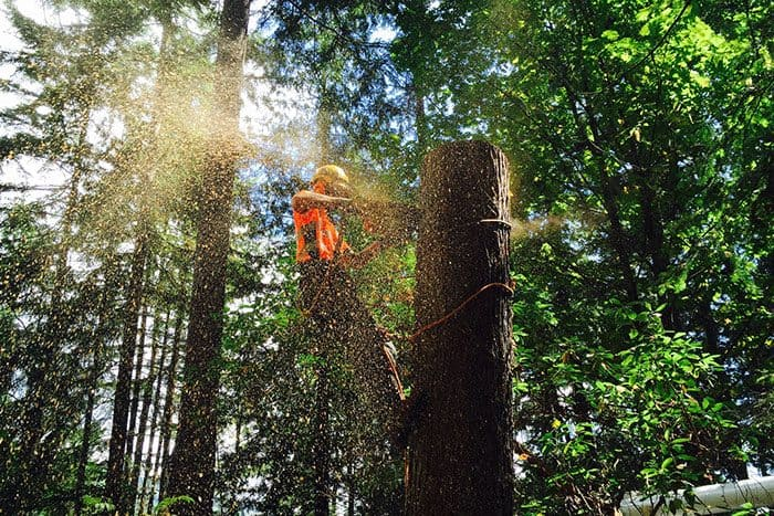 Arborist blocking down a trunk : ClimbingArborist.com