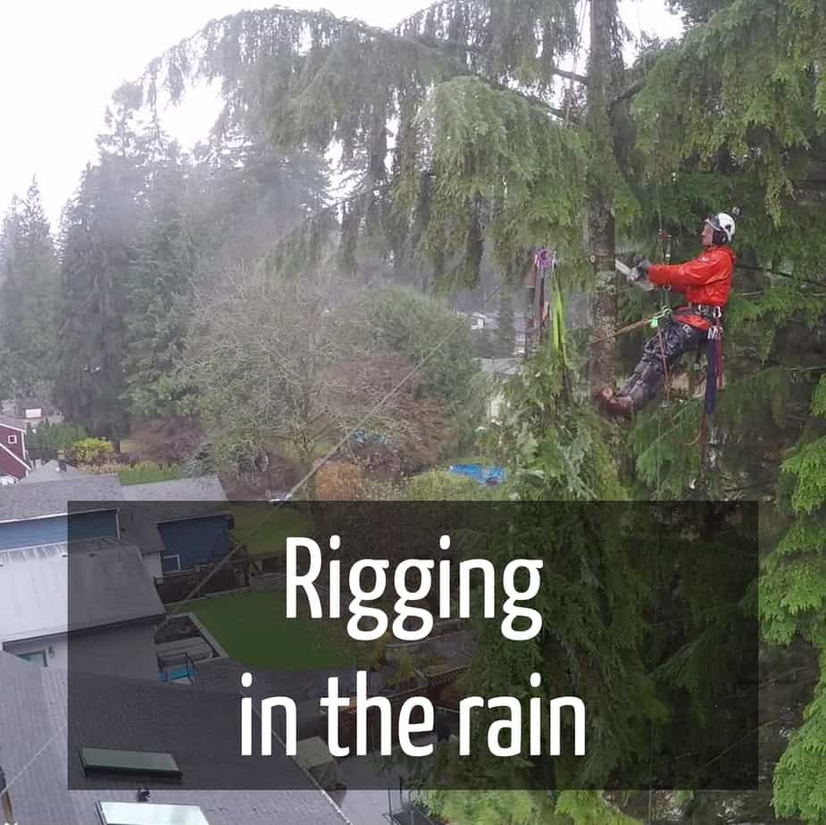 Rigging in the rain : ClimbingArborist.com
