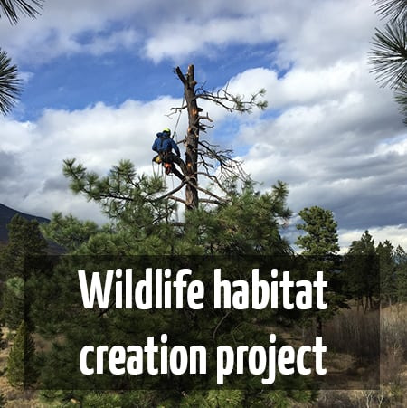 Wildlife habitat creation project : ClimbingArborist.com