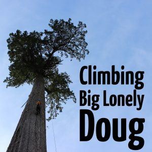 Climbing Big lonely doug : ClimbingArborist.com