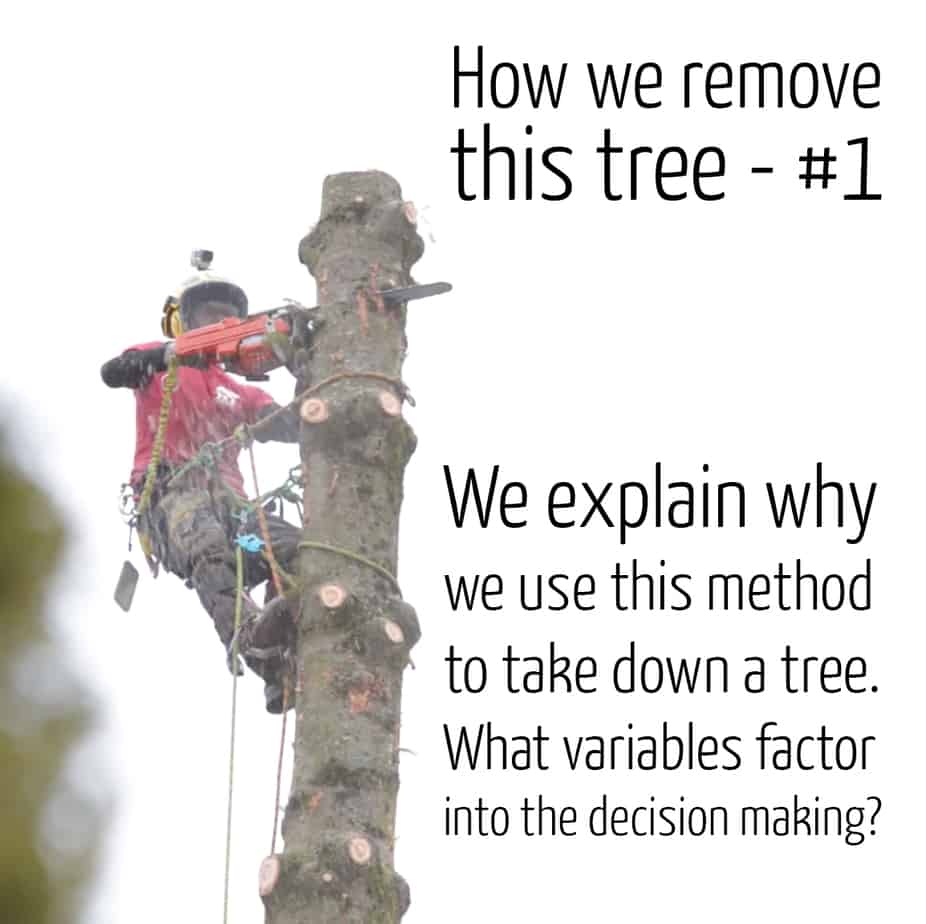 How we remove a tree #1