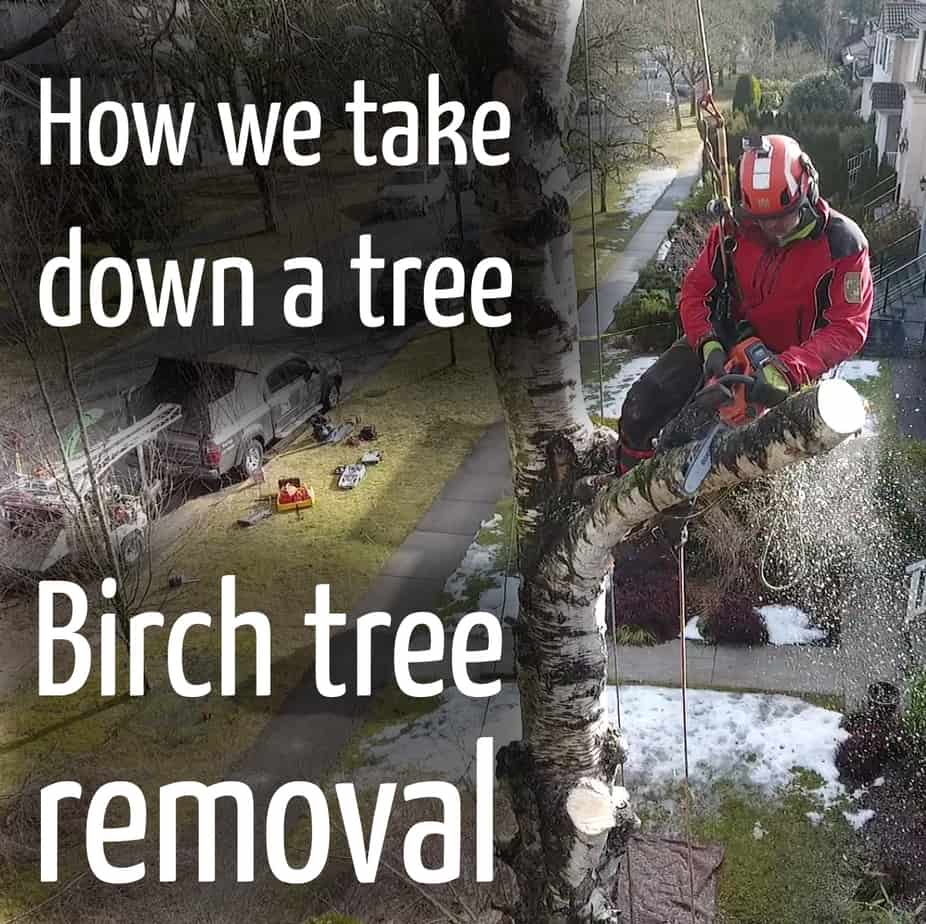 How we remove a tree #2