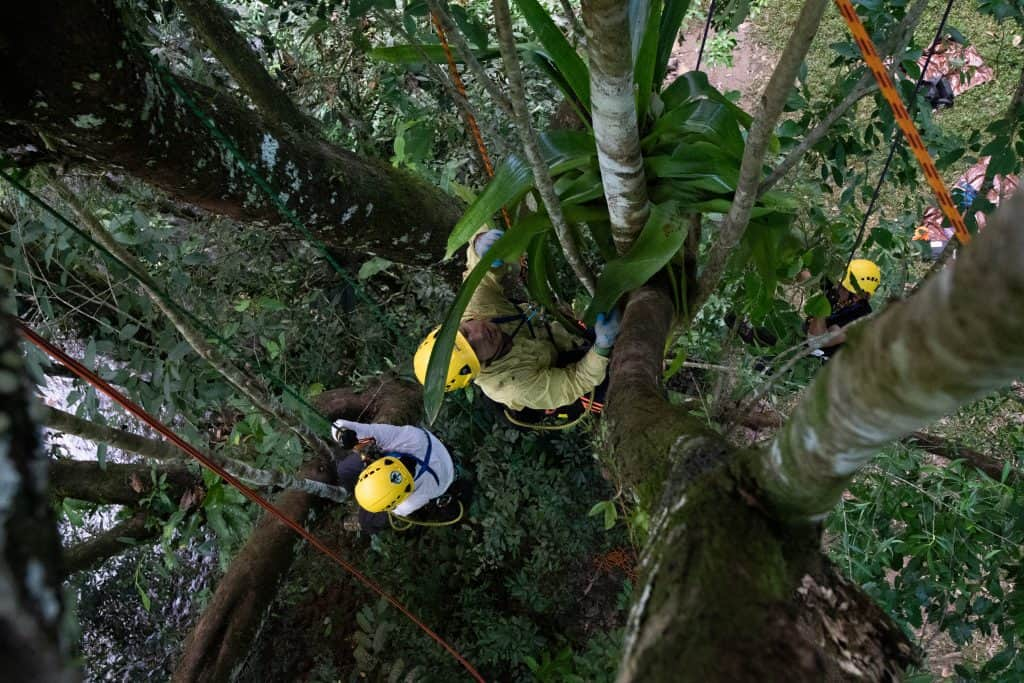 ClimbingArborist Blog - Training in the tropical rainforest
