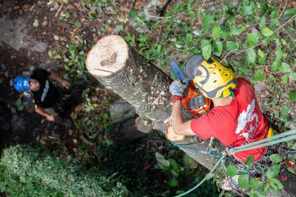 Arborist Worksite videos - ClimbingArborist.com