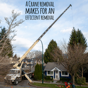 Tree removal with crane ClimbingArborist.com