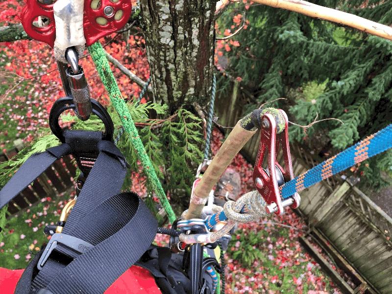 2 rope tree climbing ClimbingArborist.com