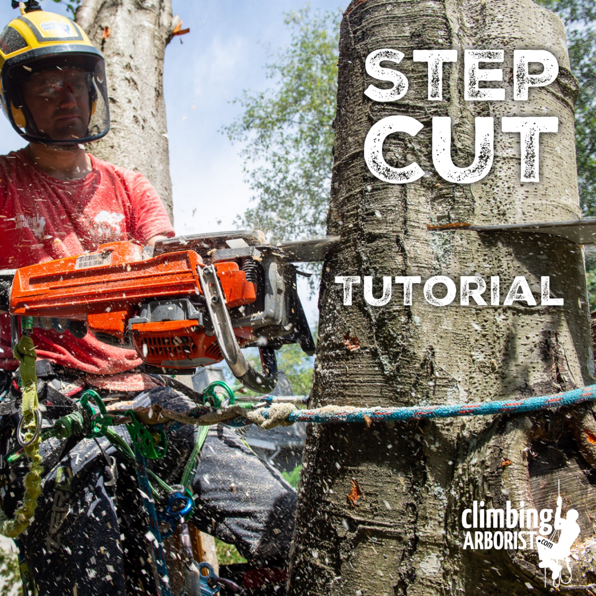 Step Cut Tutorial ClimbingArborist.com