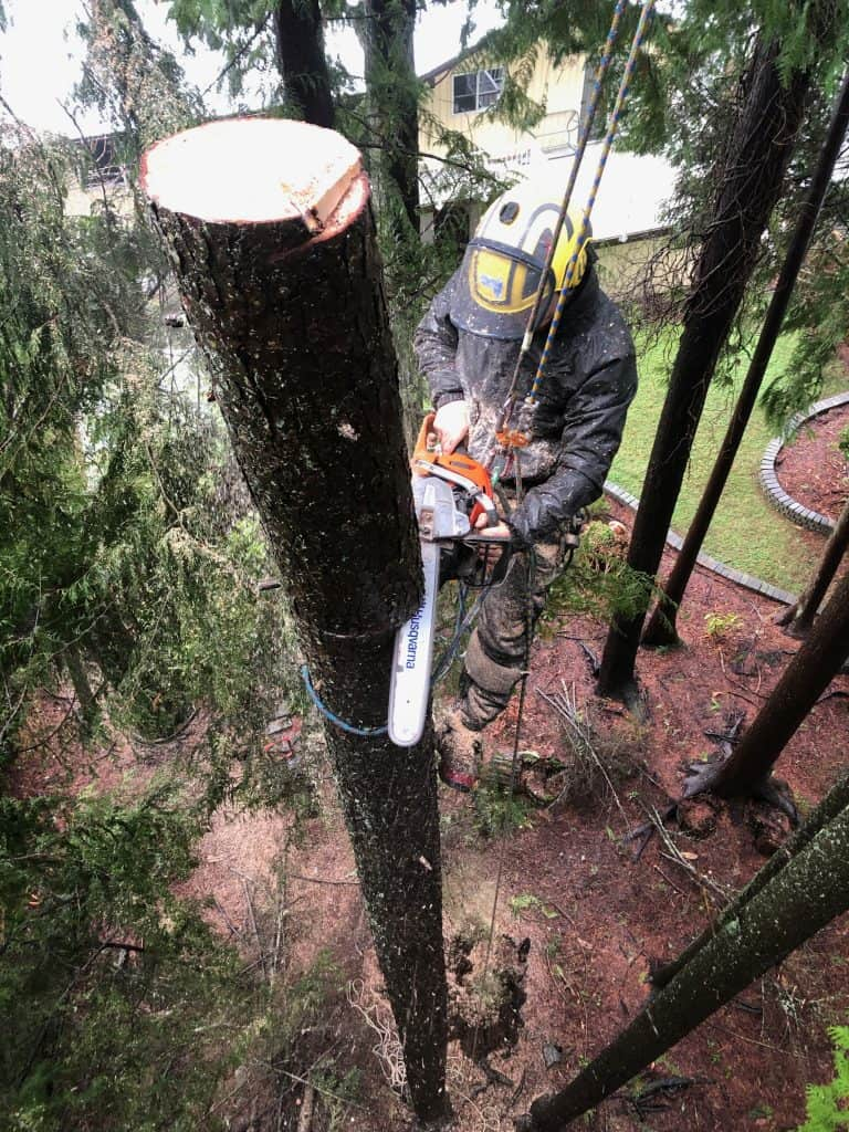 arborist piecing down a stem - Skills improve my efficiency; efficiency improve my skills! - Climbingarborist.com