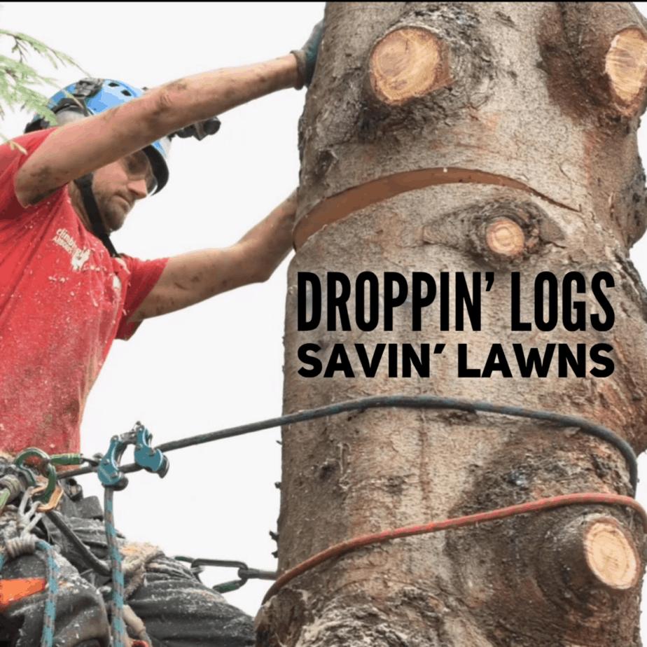 Arborist Dropping logs - ClimbingArborist.com