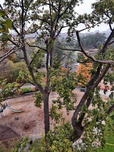 Tree Climbing regulations - ClimbingArborist.com